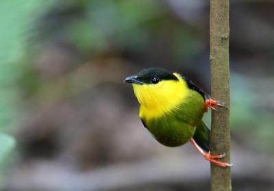 BIRDS  (51 species)