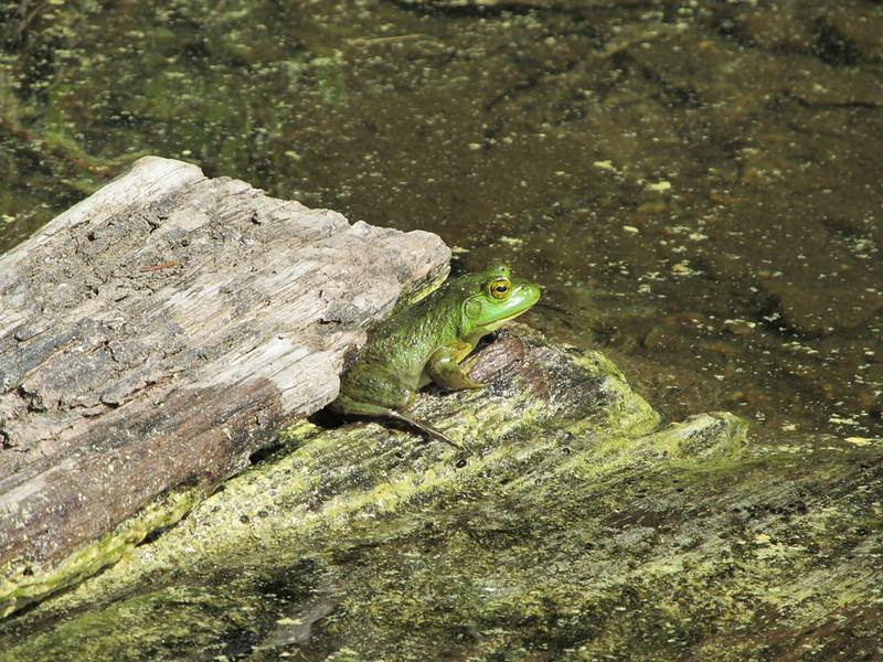 05 frog.JPG