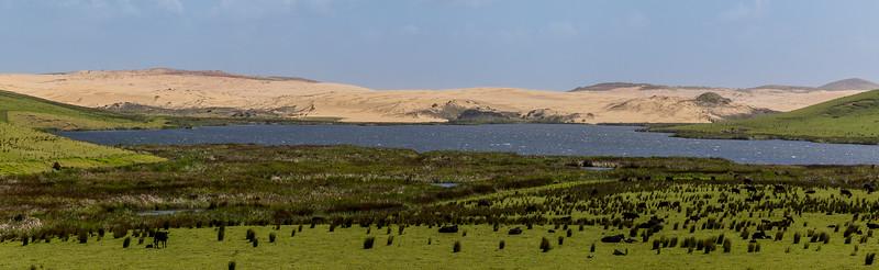 Die Dünen werden zu Grasland