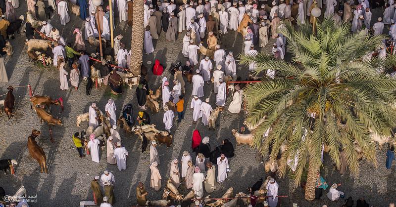 DJI_0088 copy- Oman.jpg