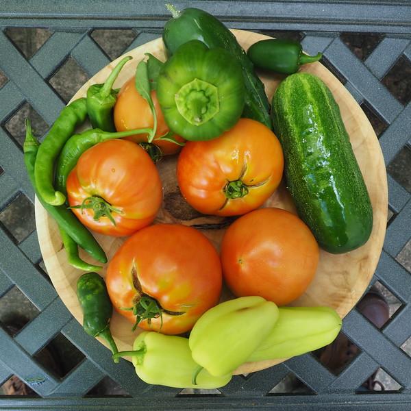 Summer Harvest.jpg