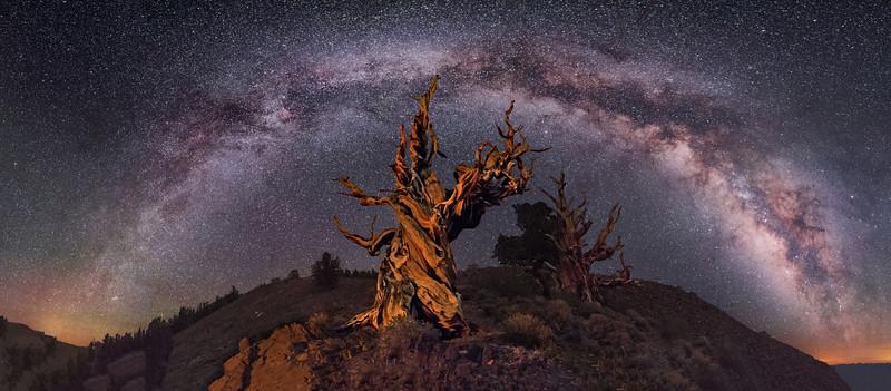 Ancient Bristlecone Pine Panorama