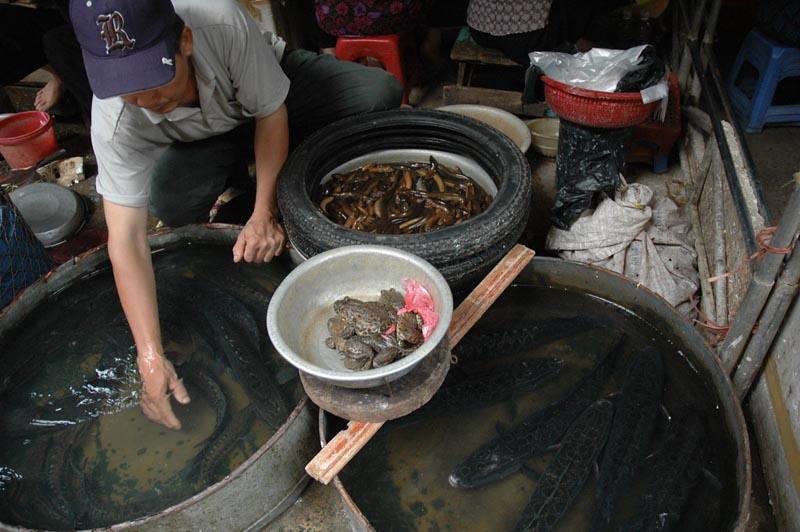vietnam(a) (3).jpg