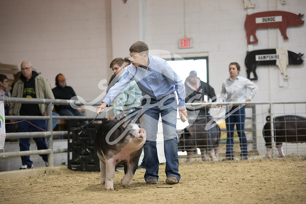 CPS Junior Show Gilts