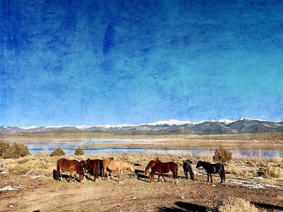 Wild Horses - Phoneography