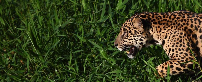 The Pantanal, Brazil.