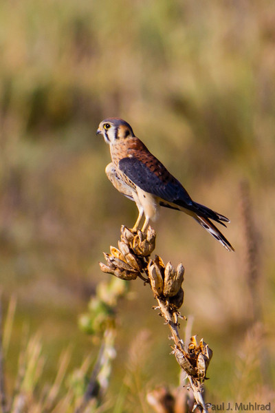 Colorado Birds