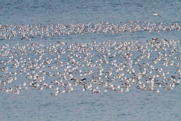 2012-11-29 RMBS Gull Raft