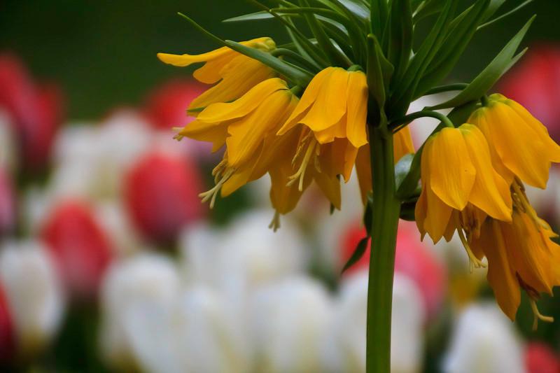 apr21-flowers.jpg