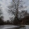 Bald Eagle nest, Hendricks County<br /> Taken January 3, 2010. Eagles were not home this day.