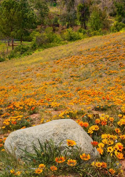 Hillside of Color - Judith Sparhawk