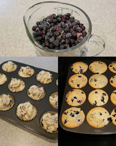 Delicious blueberry muffins made with blueberries picked by my sister