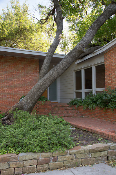 Home- Tree Damage to Roof