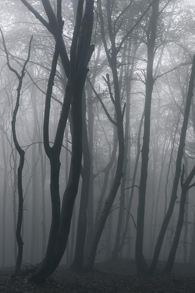 Autumn Fog III