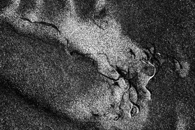 080705-015BW (Abstract; Seaweed, Sand).jpg