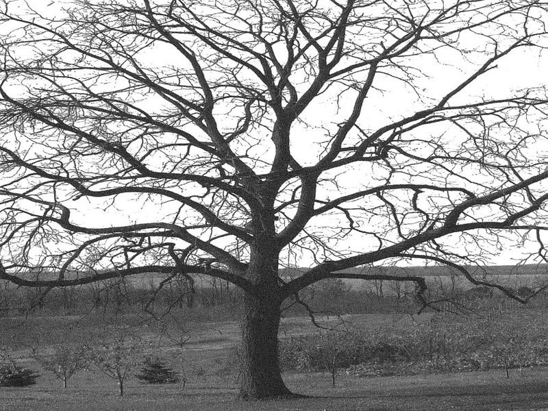 tree1_1024x768.jpg
