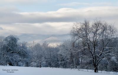 Winter Snow-Candler, North Carolina