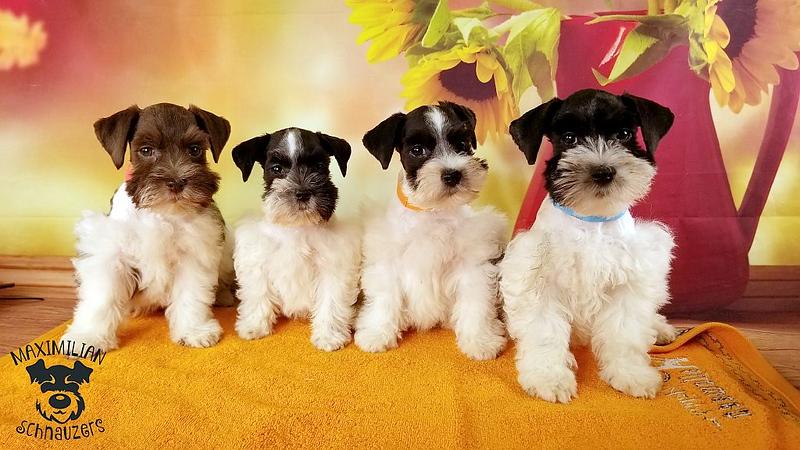 Julie Puppies 008.jpg