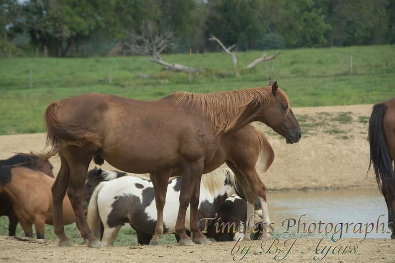 2014_Horses_Woodstown_19.jpg