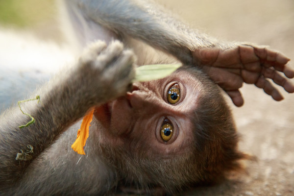 Sacred Monkey Forest in Bali, Indonesia