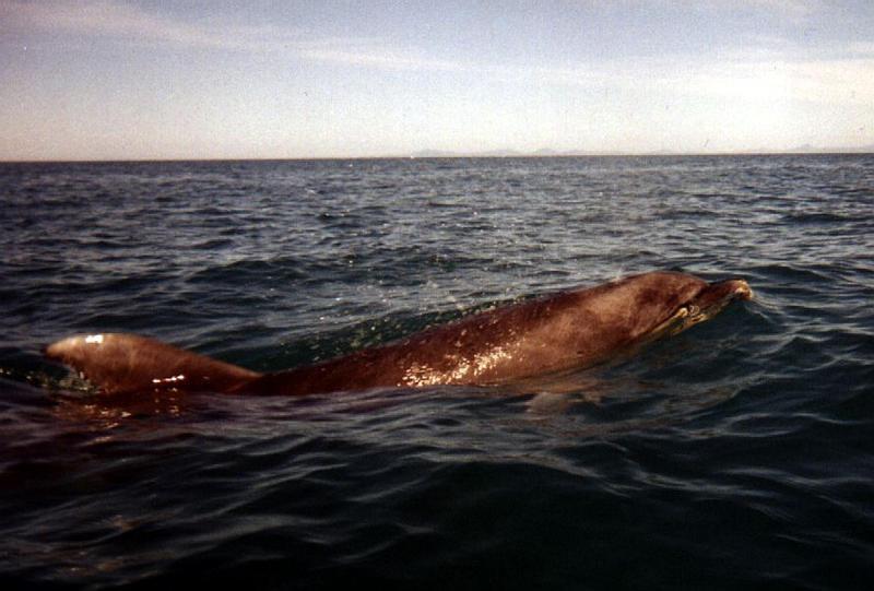 040.Dolphin.jpg