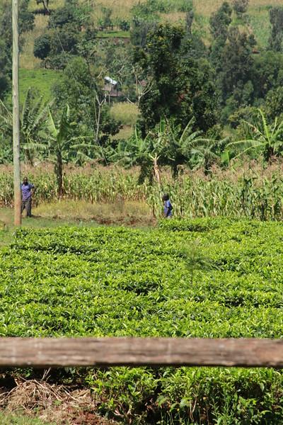 Kenya Part1 '15 2646.JPG