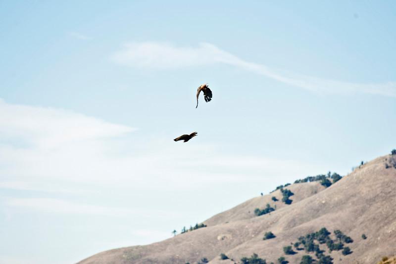 20110101_Palomar Mountain_0303.jpg