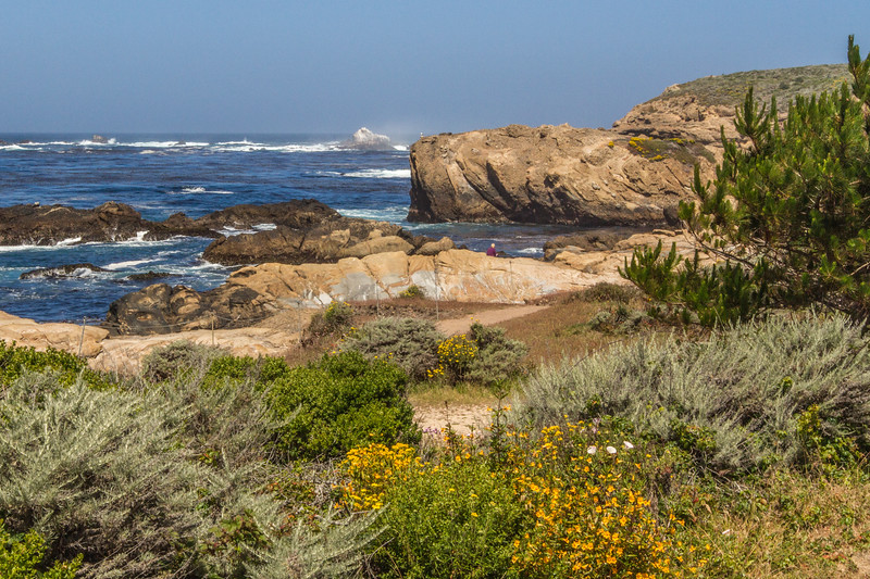 Point Lobos-6390.jpg