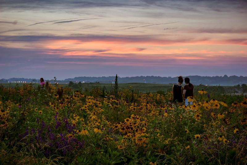 wildflower patch - photographers at sunset (p).jpg