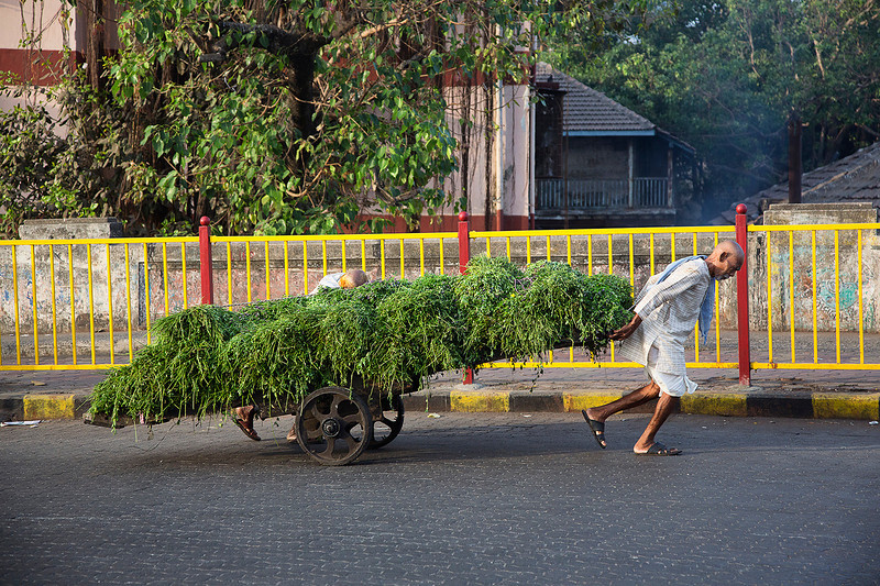 Carting goods to market