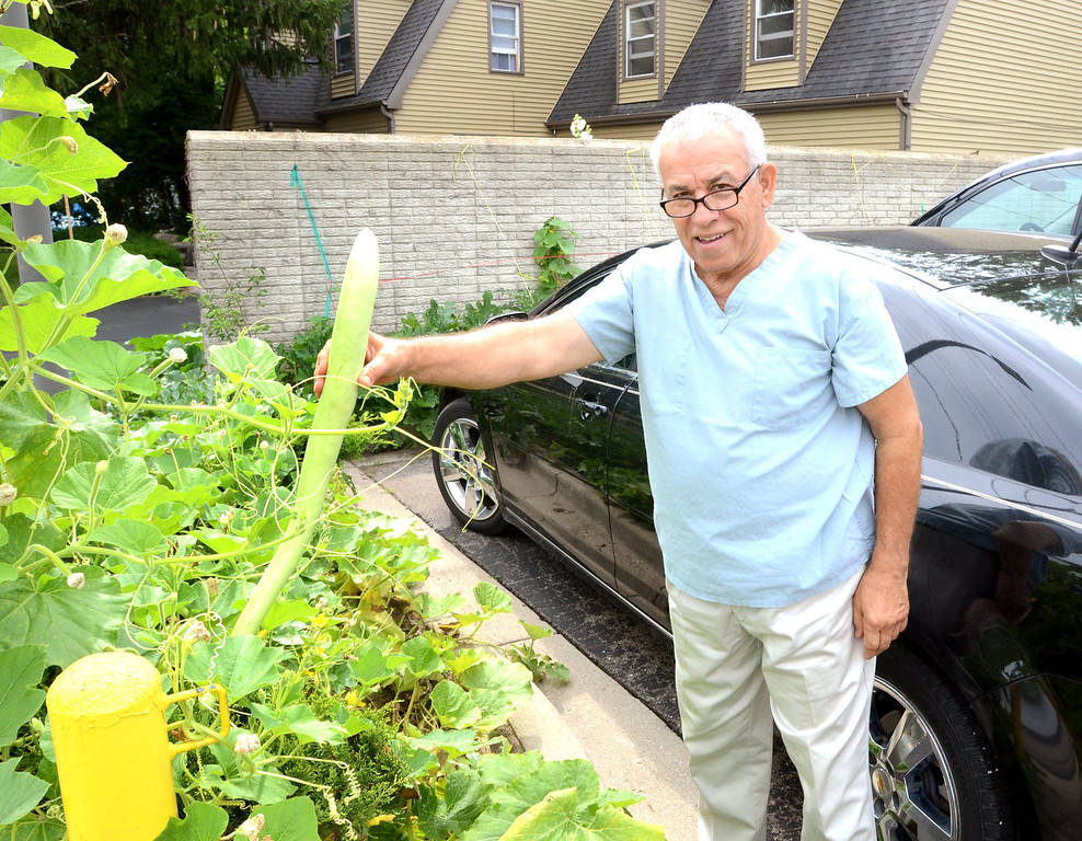 . Dr. Ahmad Hadied with a zucchini that he is growing all along the outside of his office at Keego Urgent Care in Keego Harbor.    Monday, July 22, 2013.  The Oakland Press/TIM THOMPSON