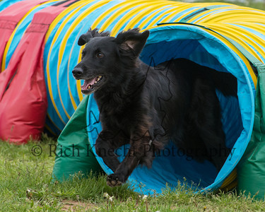 Princeton/Lower Buck AKC Agility Trial May 17-19