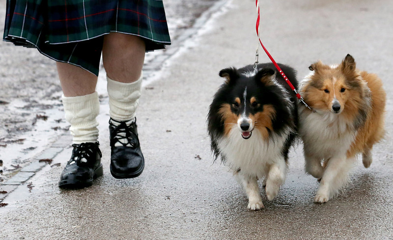 . Dogs and their owners arrive to attend the first day of Crufts dog show at the NEC on March 6, 2014 in Birmingham, England. Said to be the largest show of its kind in the world, the annual four-day event, features thousands of dogs, with competitors traveling from countries across the globe to take part. Crufts, which was first held in 1891 and sees thousands of dogs vie for the coveted title of \'Best in Show\'.  (Photo by Matt Cardy/Getty Images)