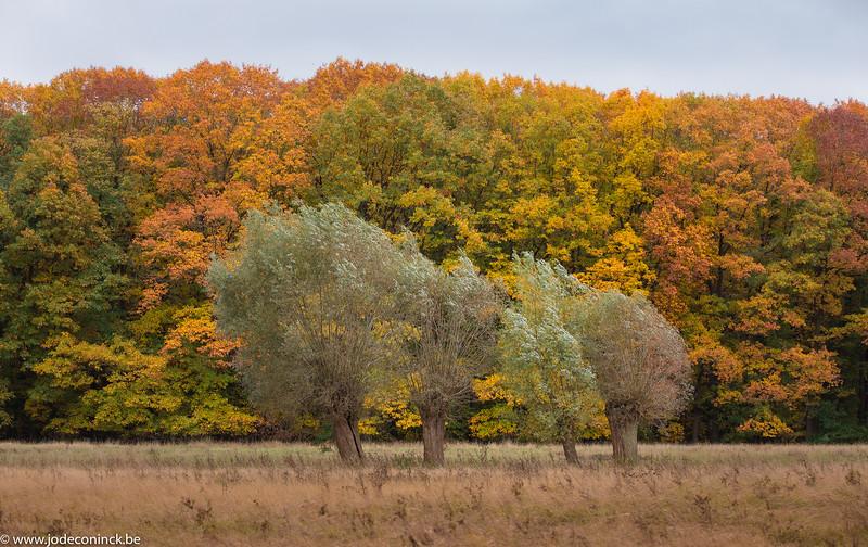 2010 Herfst in Kravaal