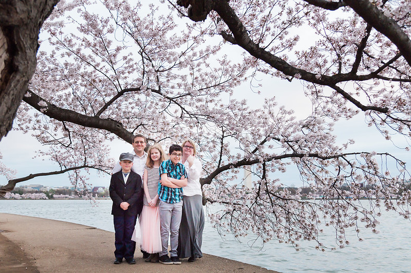 CherryBlossom-3.jpg