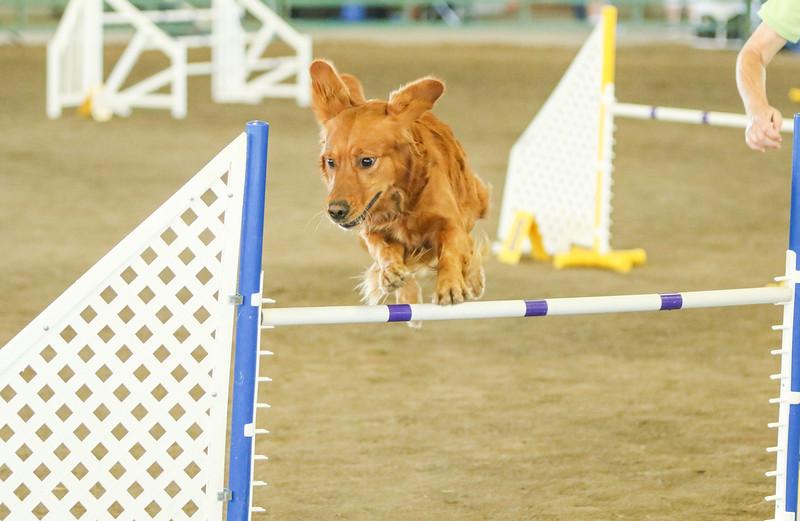 10-31-2015 Border Terrier-3045.jpg