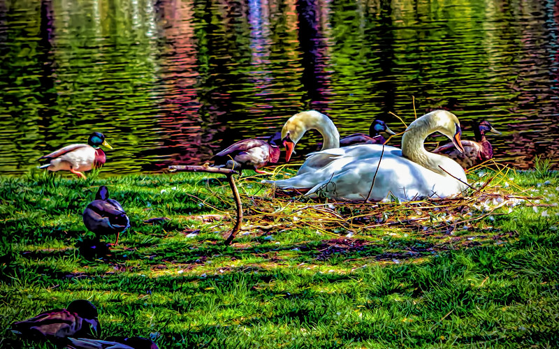 boston public garden 4.jpg