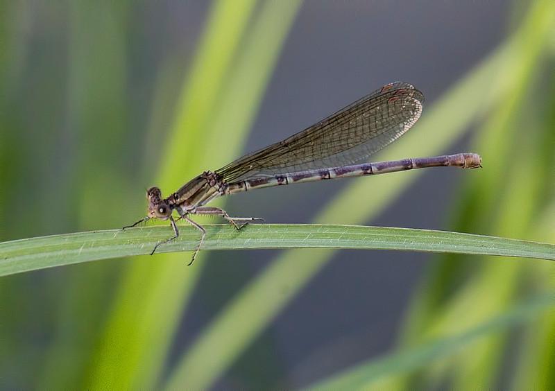 Female, Bentsen SP, TX