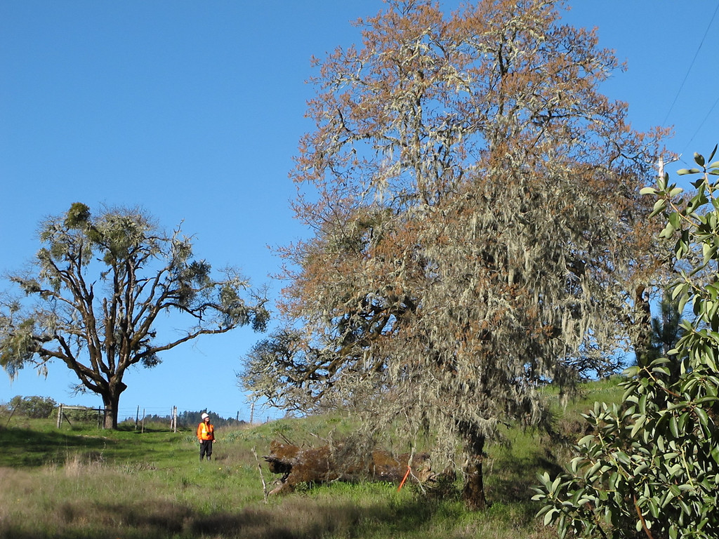 . One of the 12 CalTrans biologists noticed monitoring trees and brush for bird and other wildlife activity.