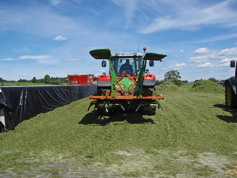 Grashøsting-44