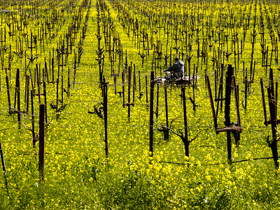 Wine Country Seasons