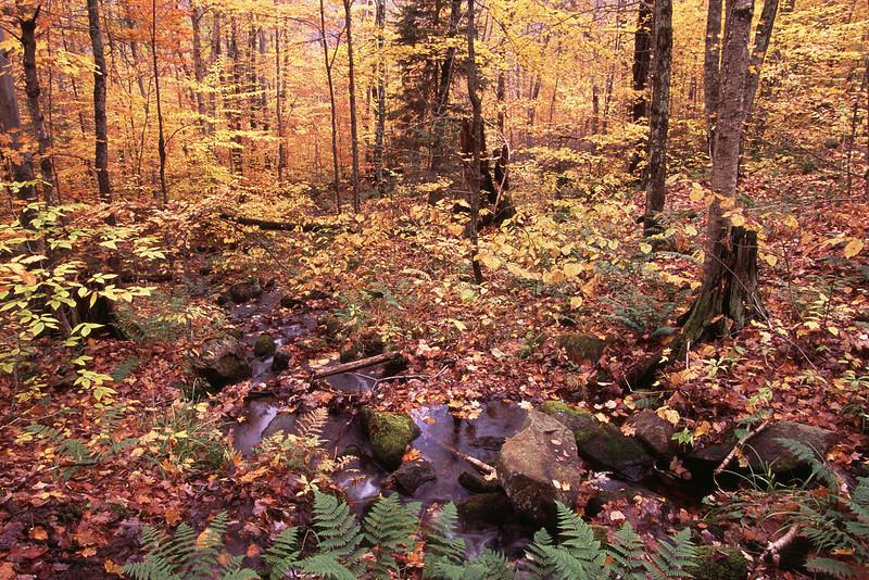 Ruisseau à l'automne - Parc national du mont Tremblant