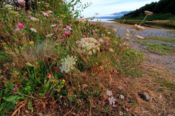 American Wildflowers & Other Plants
