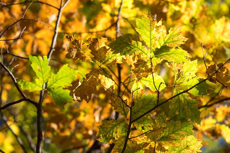 foliage-2014-76.jpg