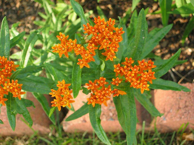 garden-2006-07-0458_std.jpg