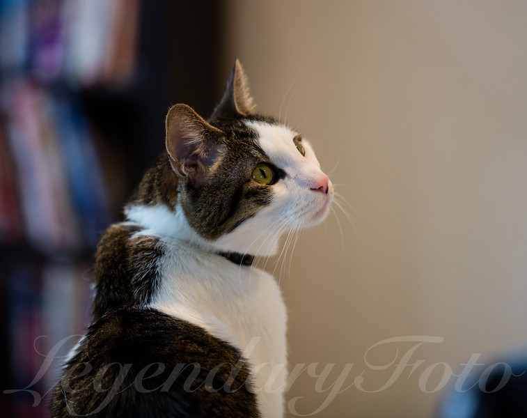 Cats_Bugatti_1.jpg