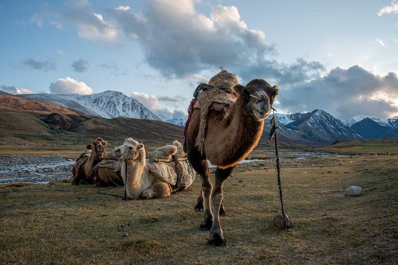 Mongolsko (440 of 496).jpg