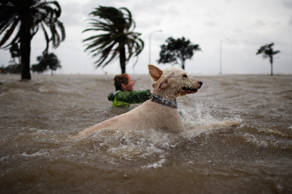 Description of . Ruffin Henry and Scout the dog swim in the rising water of Lake Pontchatrain as Hurricane Isaac approaches on August 28, 2012 in New Orleans, Louisiana.  Hurricane Isaac is expected to make landfall later today along the Lousiana coast.  (Photo by Chris Graythen/Getty Images)