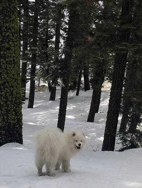 2019-03-21-0008A-Trip to Tahoe with Dogs-Lake Tahoe-Teddy the Dog.JPG