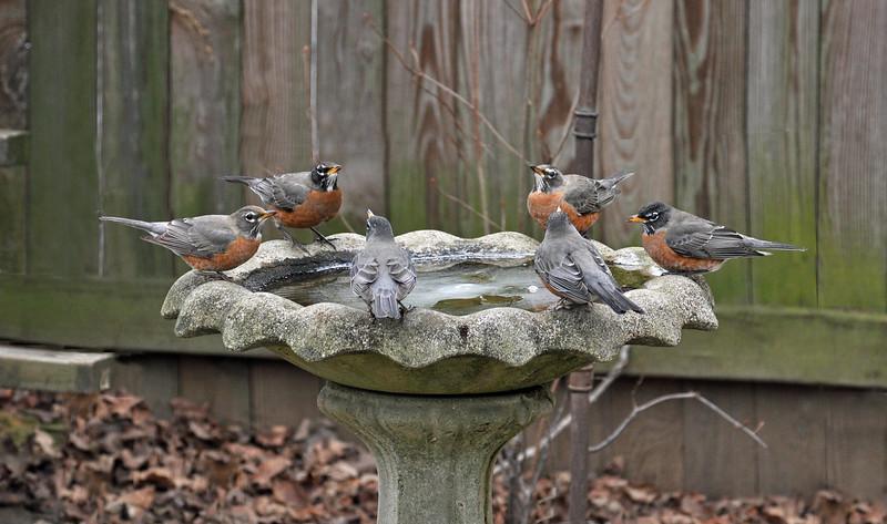 Robins - Social Distancing